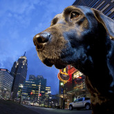 home_molly_detroit_greatorex_city_dog